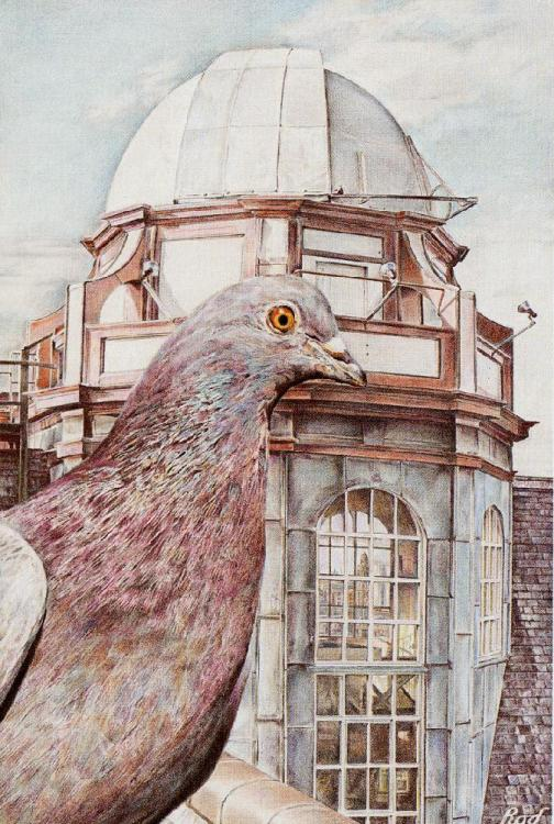 Part of a series of four Ornithology studies, set in Manchester.